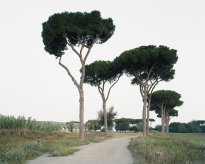 Hans-Christian Schink: Parco degli Acquedotti (1)