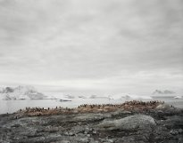 Hans-Christian Schink: Antarctica (4)
