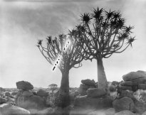Hans-Christian Schink: Namibia 1