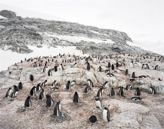 Hans-Christian Schink: Antarctica 9
