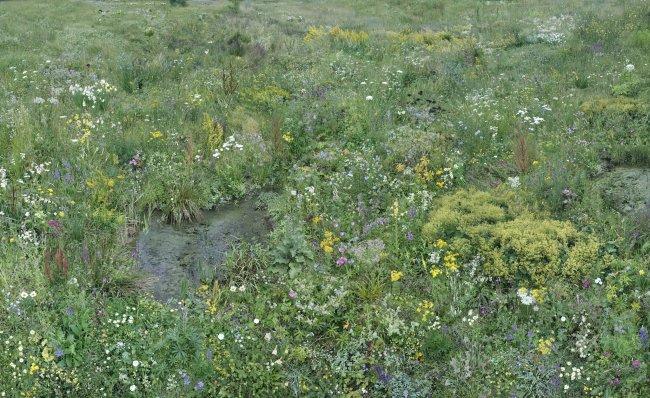 Hiroyuki Masuyama: Flowers No 01, 2004, LED Lightbox, 122 x 200 x 4 cm, ed. 5 + 2AP