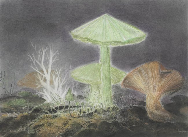 Wieland Payer: Funghi