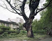 Hans-Christian Schink: Inya Myaing Road, Yangon (1)