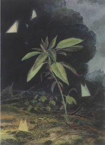 Wieland Payer: Biotop II