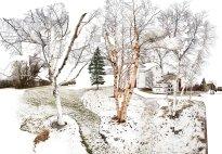Raissa Venables: Birch Grove