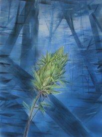 Wieland Payer: Knospe, Pastell, Kohle und Aquarell auf grundiertem MDF, 80 x 60 cm