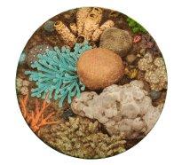 Grita Götze: Korallen, Teller, 2020, Engobemalerei, ∅ 29 cm,