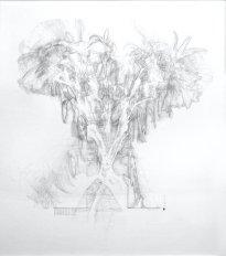 Hiroyuki Masuyama: Lily No.04, 28.11.2019 - 26.12.2019, 2019, pencil on paper transparent acrylic frame, 160 x 140 x 6 cm