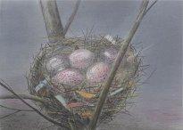 Wieland Payer: Nest