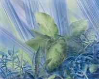 Wieland Payer: Petasitis Hybridus, 2021, Pastell und Aquarell auf grundiertem MDF, 52 x 66 cm
