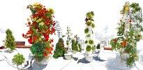 Raissa Venables: Tower Garden