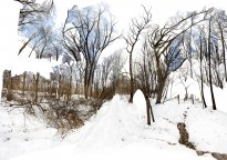 Raissa Venables: Winter Woods